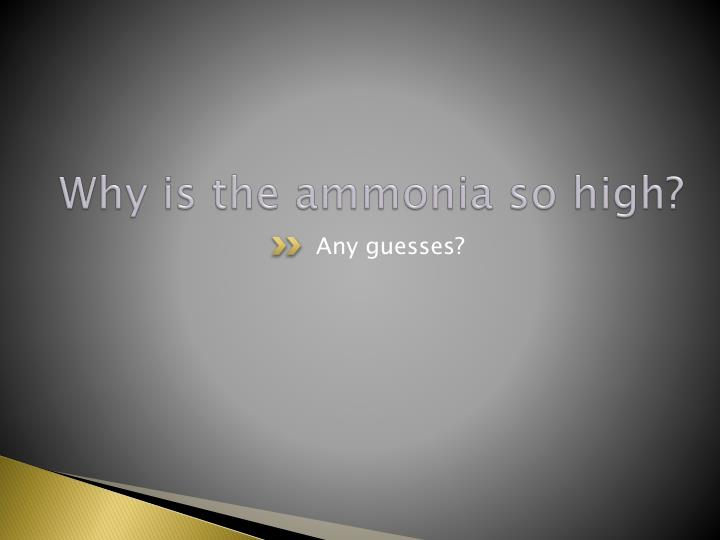 Why is the ammonia so high?