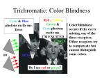 trichromatic color blindness