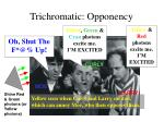 trichromatic opponency