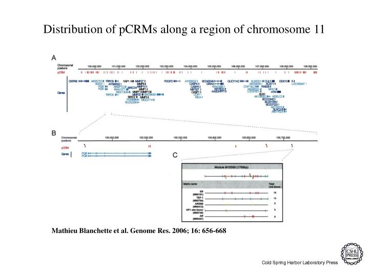 Distribution of pCRMs along a region of chromosome 11