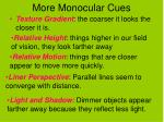 more monocular cues