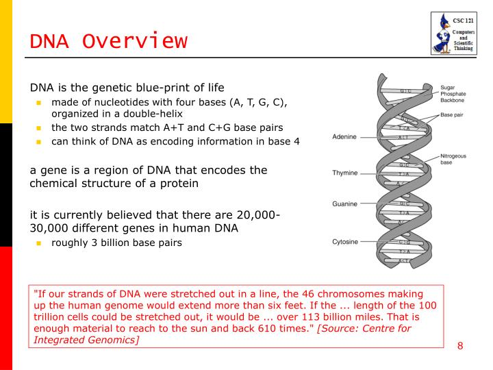DNA Overview