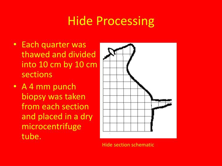 Hide Processing