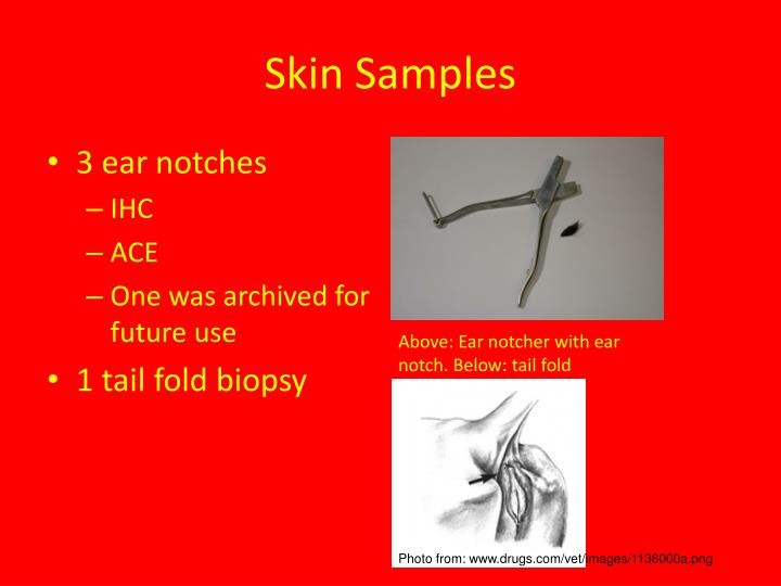 Skin Samples