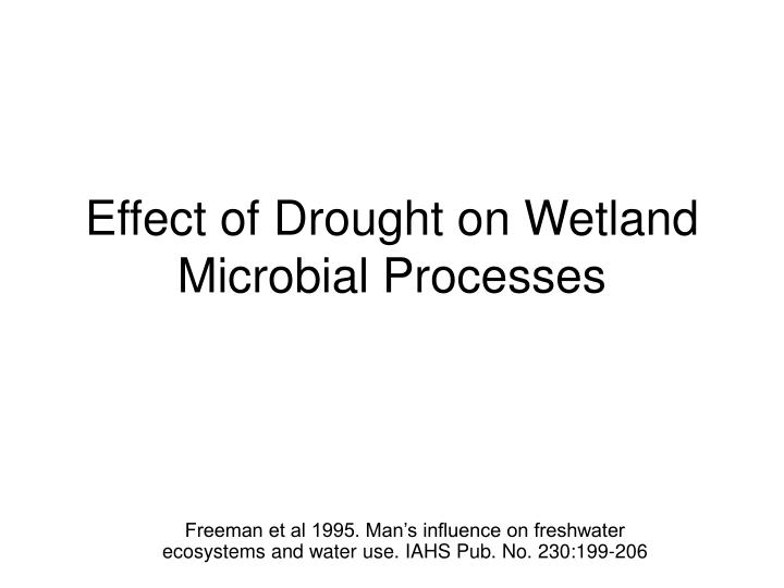 Effect of drought on wetland microbial processes