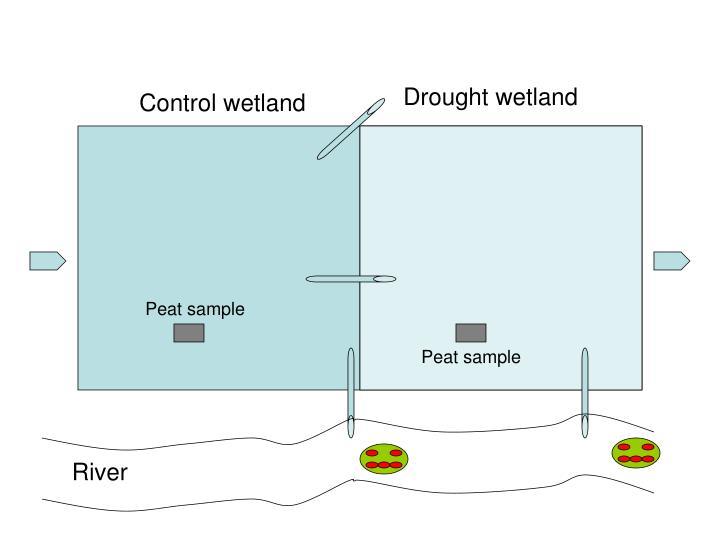 Drought wetland