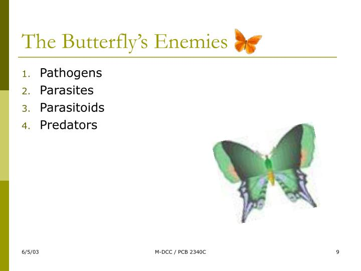 The Butterfly's Enemies