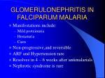 glomerulonephritis in falciparum malaria