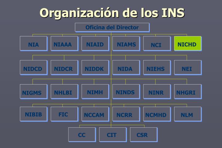 Organización de los INS