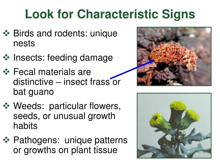 Look for Characteristic Signs