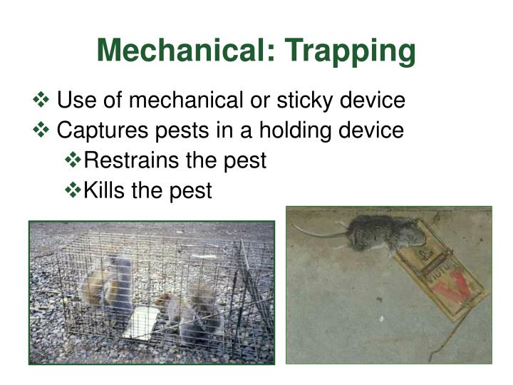Mechanical: Trapping