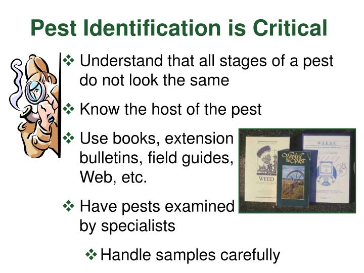 Pest Identification is Critical