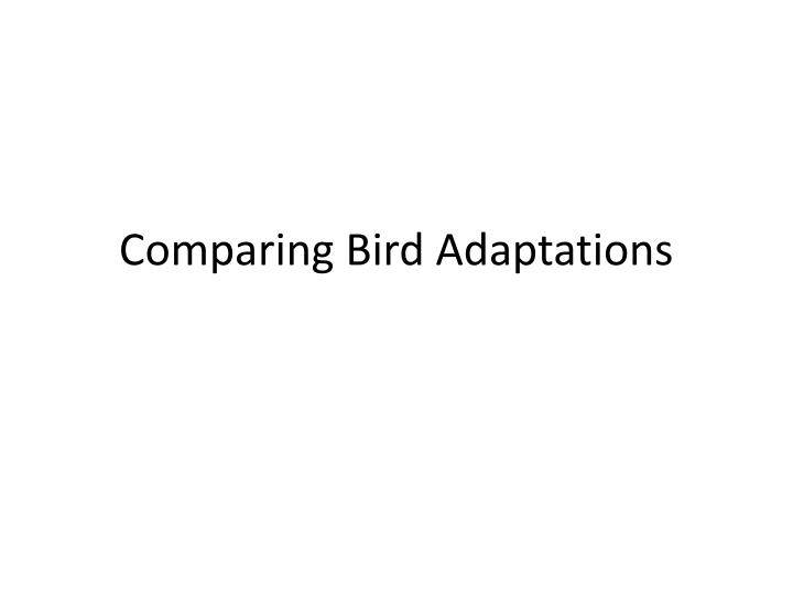 comparing bird adaptations n.