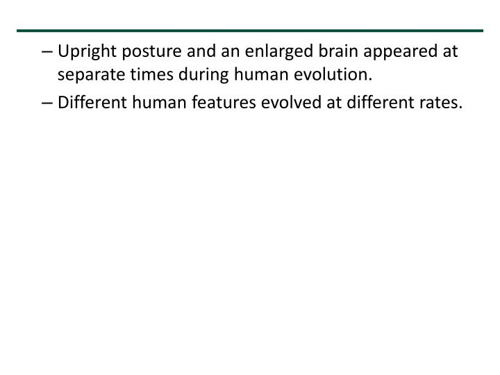 Upright posture and an enlarged brain appeared at separate times during human evolution.