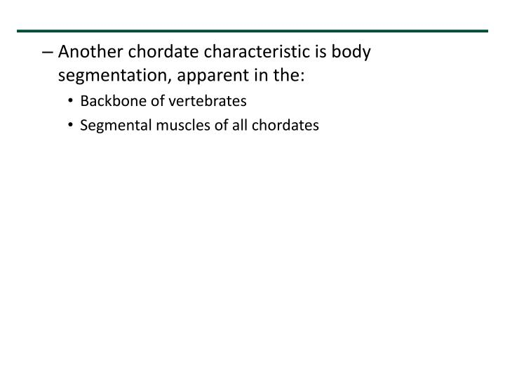 Another chordate characteristic is body segmentation, apparent in the:
