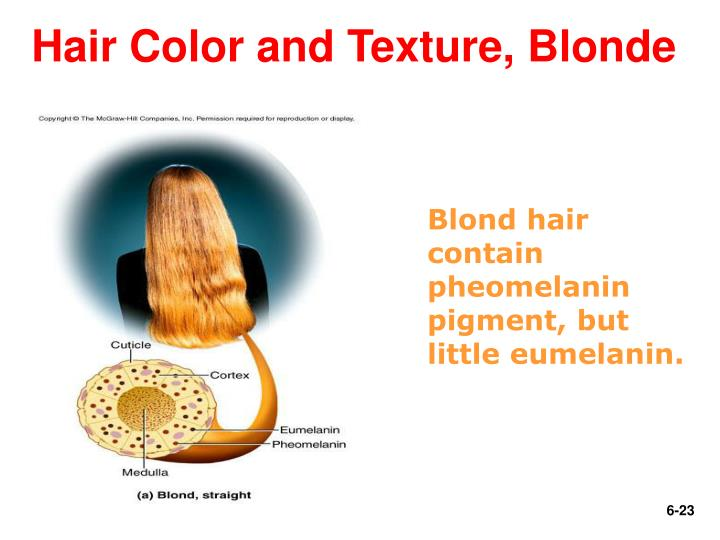 Hair Color and Texture, Blonde