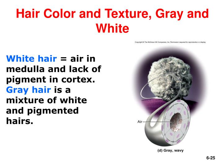 Hair Color and Texture, Gray and White