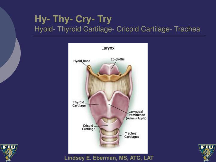 Hy- Thy- Cry- Try