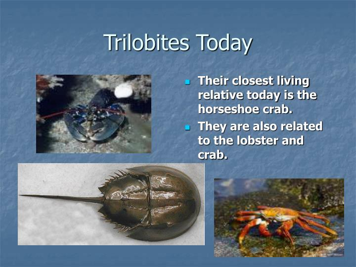 Trilobites Today