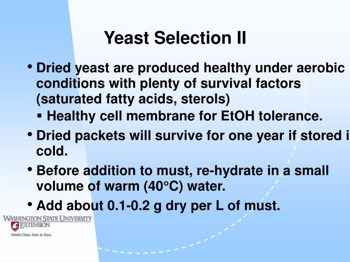 Yeast Selection II