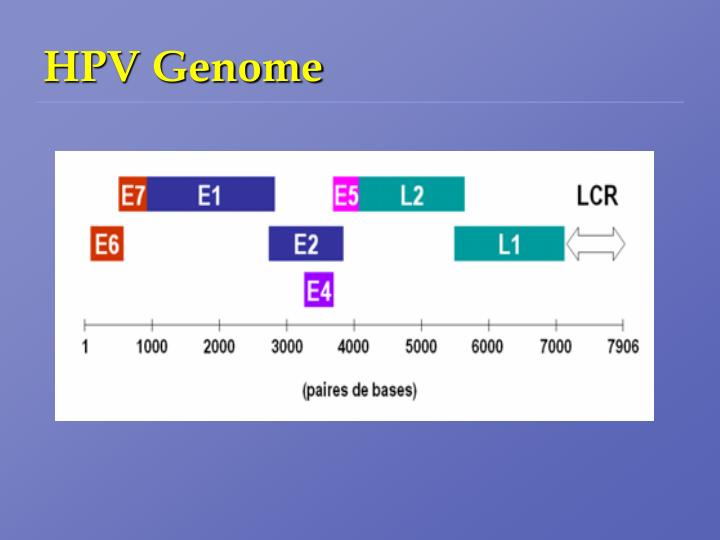 Hpv genome