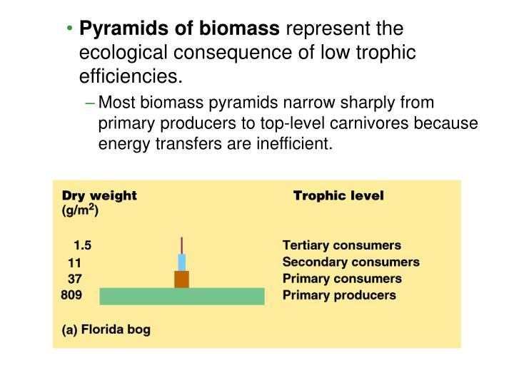 Pyramids of biomass