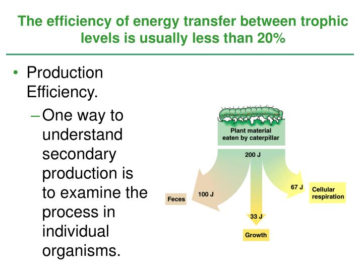 The efficiency of energy transfer between trophic levels is usually less than 20%