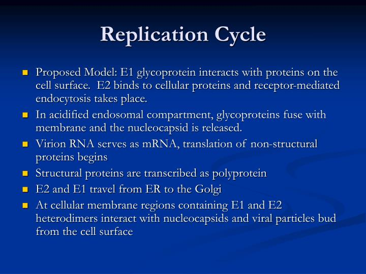 Replication Cycle
