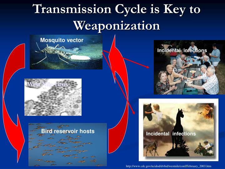 Transmission Cycle is Key to Weaponization