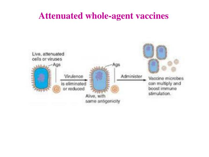 Attenuated whole-agent vaccines