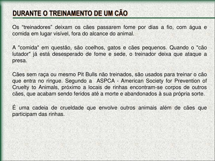 DURANTE O TREINAMENTO DE UM CÃO