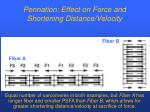 pennation effect on force and shortening distance velocity