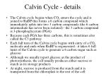 calvin cycle details