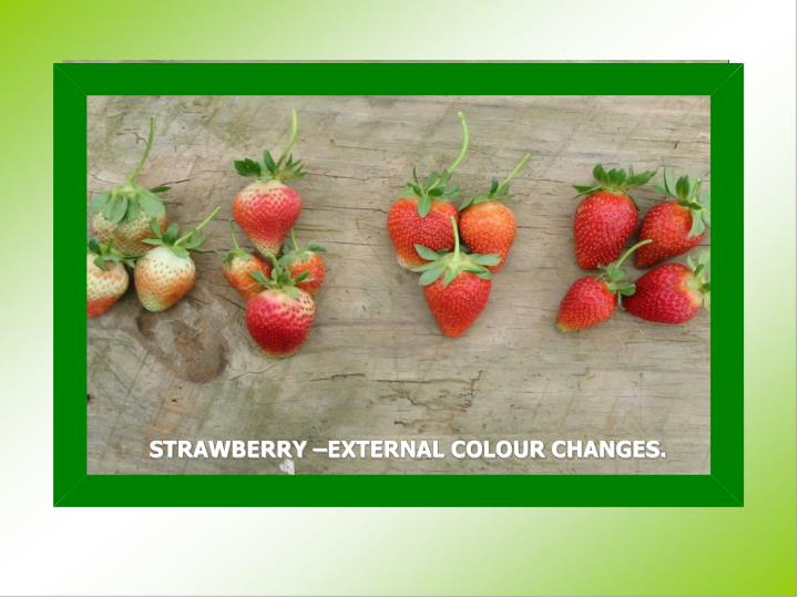 STRAWBERRY –EXTERNAL COLOUR CHANGES.