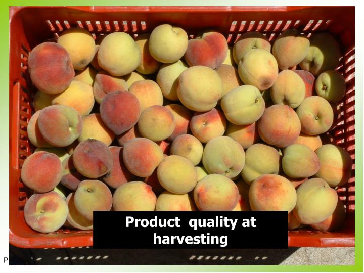 Product  quality at harvesting