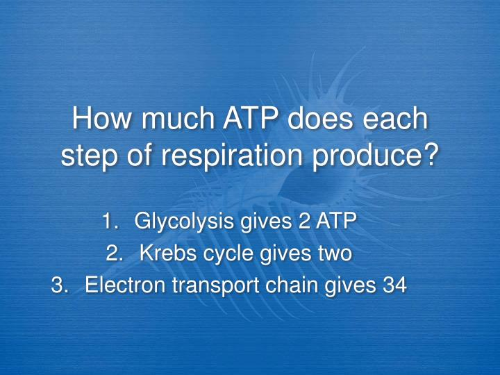 How much ATP does each step of respiration produce?