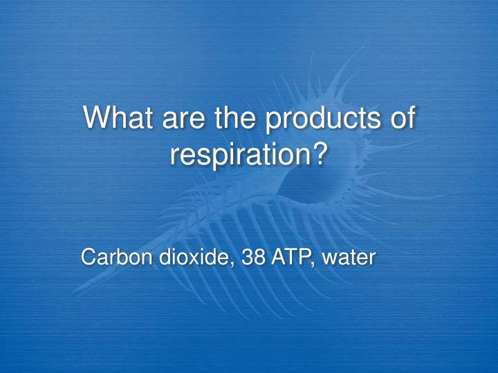 What are the products of respiration?