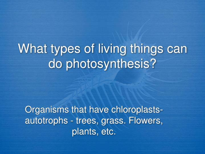 What types of living things can do photosynthesis?