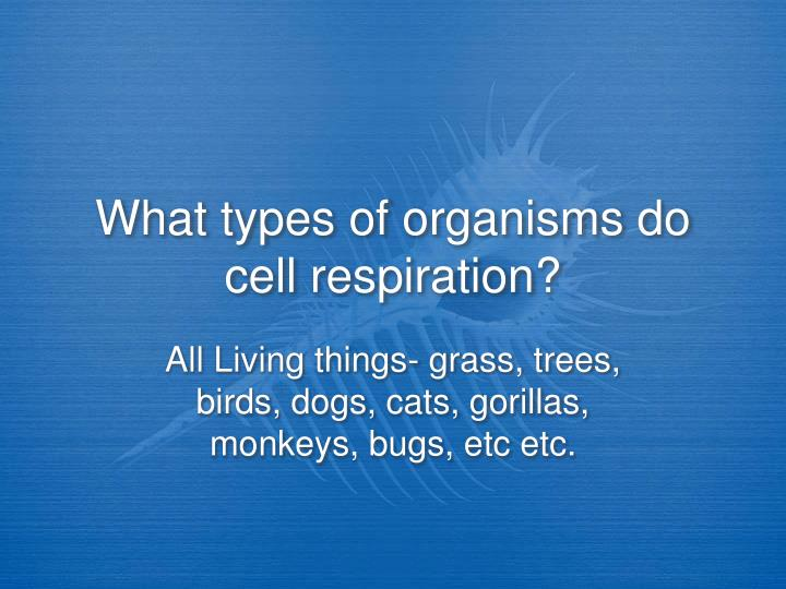 What types of organisms do cell respiration?
