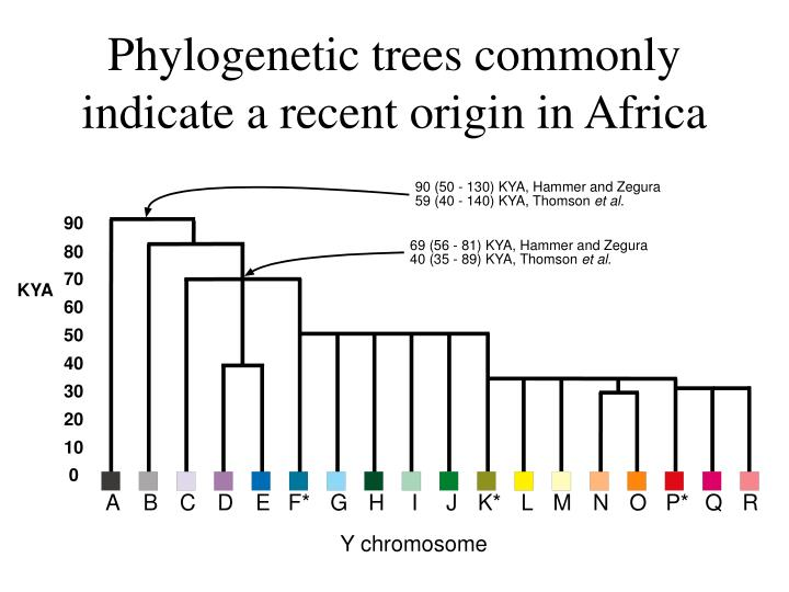 Phylogenetic trees commonly indicate a recent origin in Africa