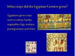what crops did the egyptian farmers grow