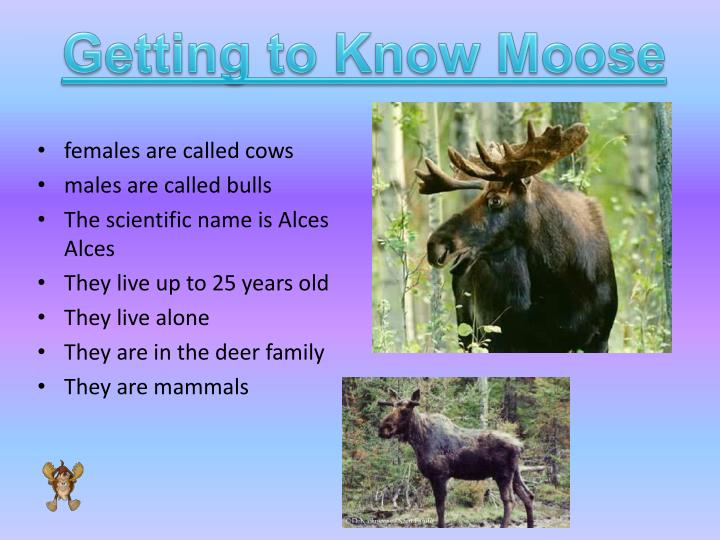 Getting to Know Moose