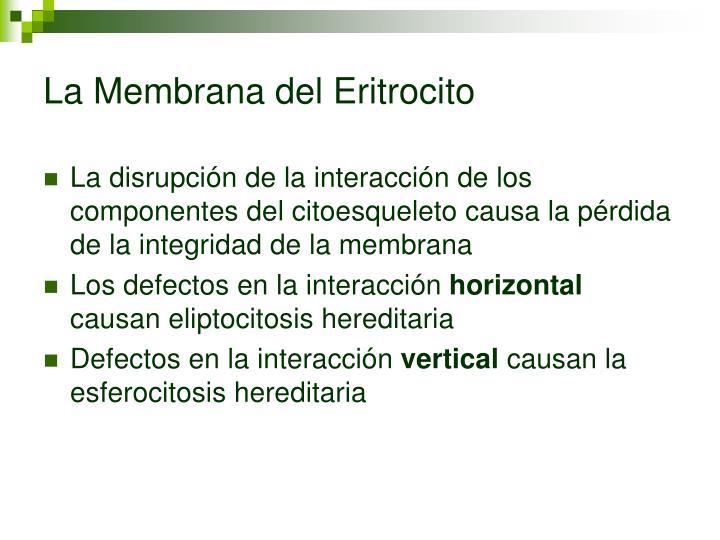 La Membrana del Eritrocito