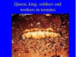 queen king soldiers and workers in termites