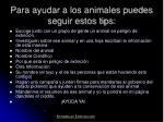 para ayudar a los animales puedes seguir estos tips