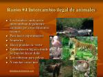 raz n 4 intercambio ilegal de animales