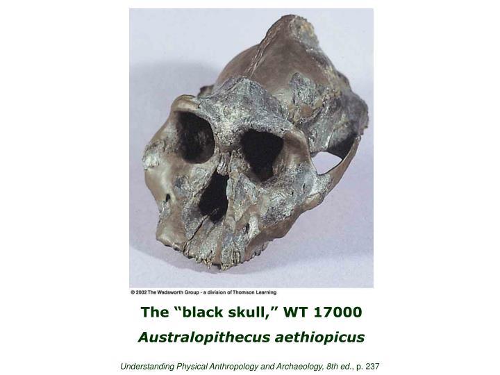 """The """"black skull,"""" WT 17000"""