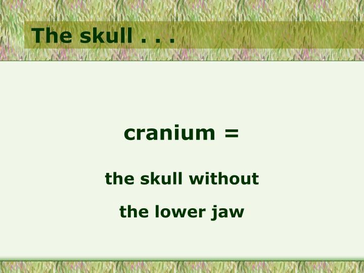 The skull . . .