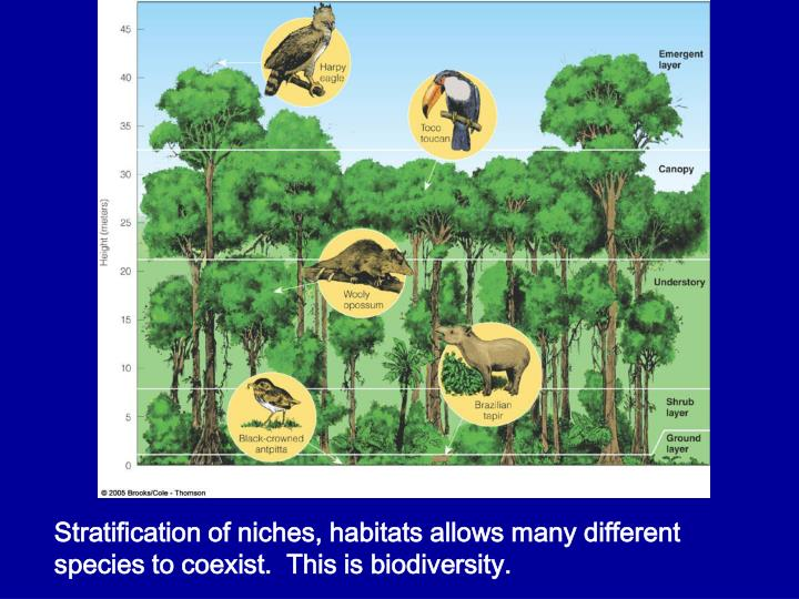 Stratification of niches, habitats allows many different