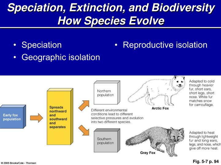 Speciation, Extinction, and Biodiversity